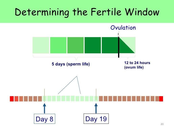 Fertility sperm life