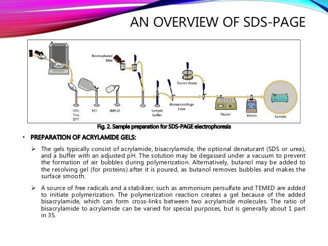 Introduction, Principle, Instrumentation and Applications of SDS-PAGE