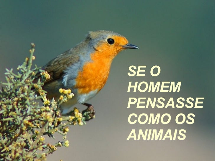 SE O HOMEM PENSASSE COMO OS ANIMAIS