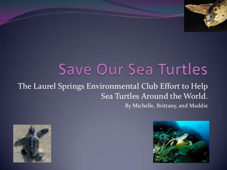 The Laurel Springs Environmental Club Effort to Help Sea Turtles Around the World. By Michelle, Brittany, and Maddie