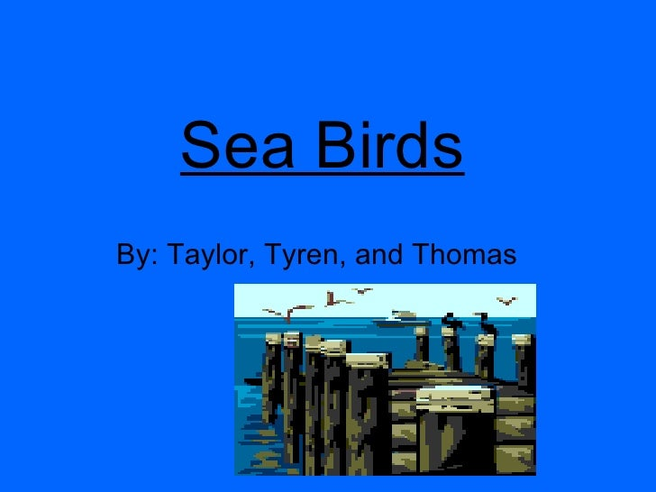 Sea Birds   By: Taylor, Tyren, and Thomas