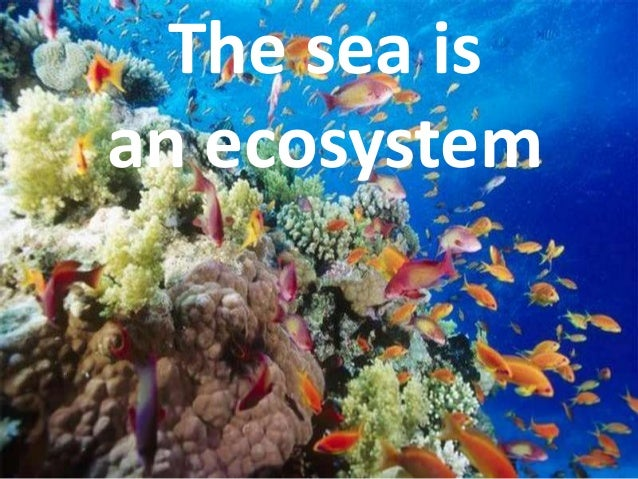The sea isan ecosystem