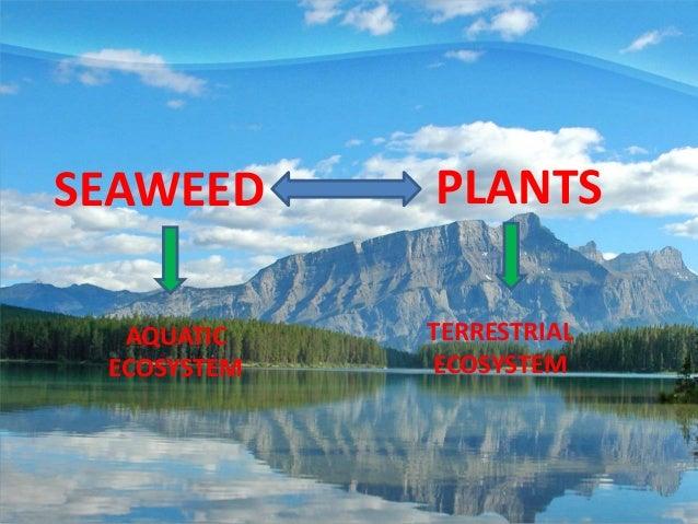 SEAWEED      PLANTS  AQUATIC    TERRESTRIAL ECOSYSTEM   ECOSYSTEM
