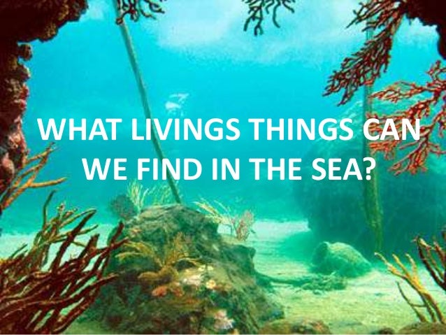 WHAT LIVINGS THINGS CAN  WE FIND IN THE SEA?