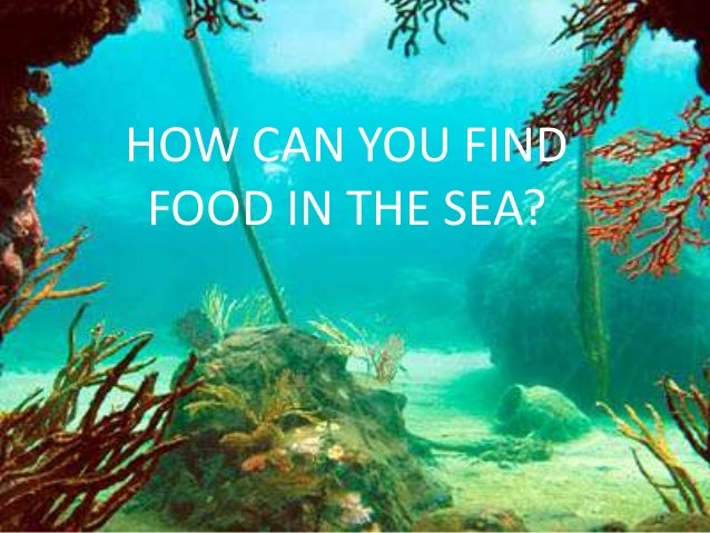 HOW CAN YOU FIND FOOD IN THE SEA?