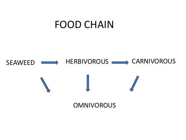 FOOD CHAINSEAWEED    HERBIVOROUS    CARNIVOROUS             OMNIVOROUS
