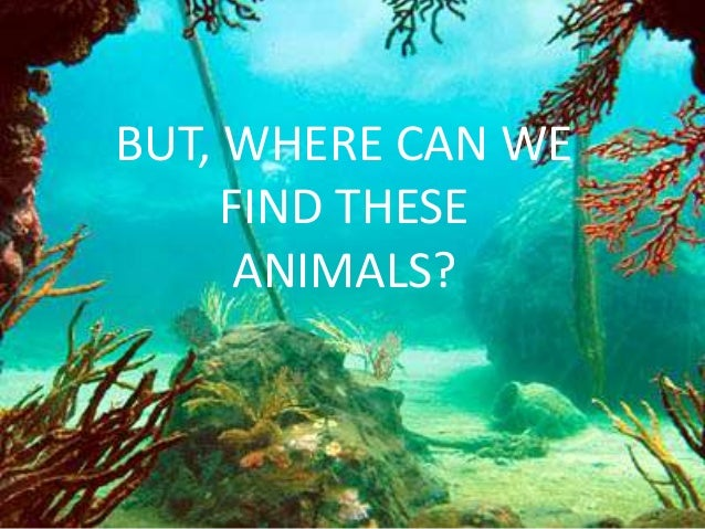 BUT, WHERE CAN WE     FIND THESE      ANIMALS?