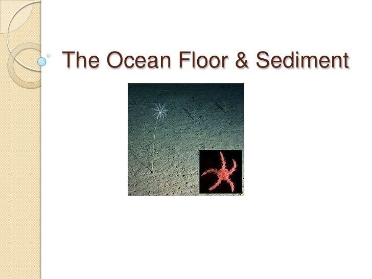 Sea floorslideshow