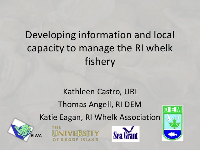 Developing information and local capacity to manage the RI whelk fishery Kathleen Castro, URI Thomas Angell, RI DEM Katie ...