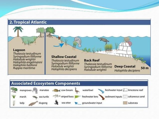 Natural Erosion Vs Anthropogenic Erosion