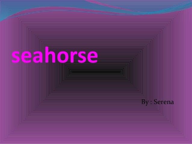 seahorse By : Serena