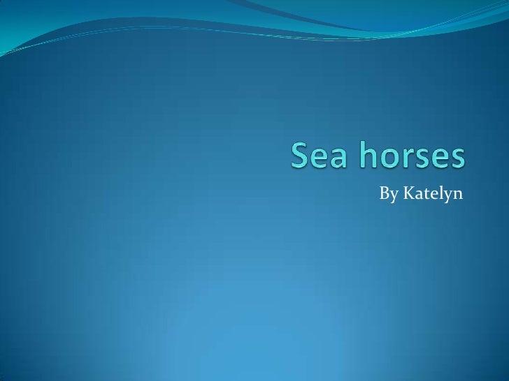 Sea horses<br />By Katelyn<br />