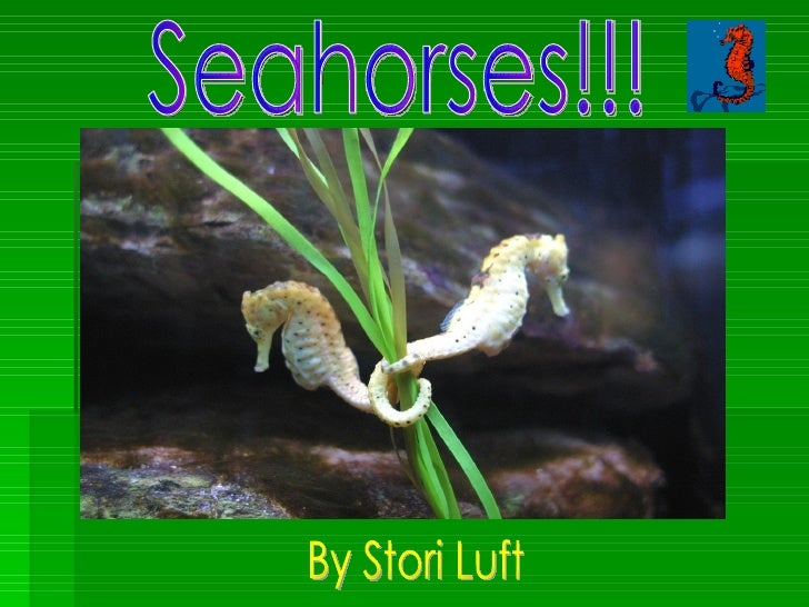 Seahorses!!! By Stori Luft
