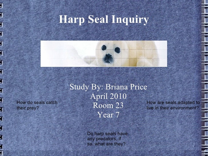 Harp Seal Inquiry                            Study By: Briana Price                             April 2010 How do seals ca...