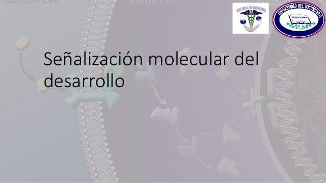 Señalización molecular del desarrollo