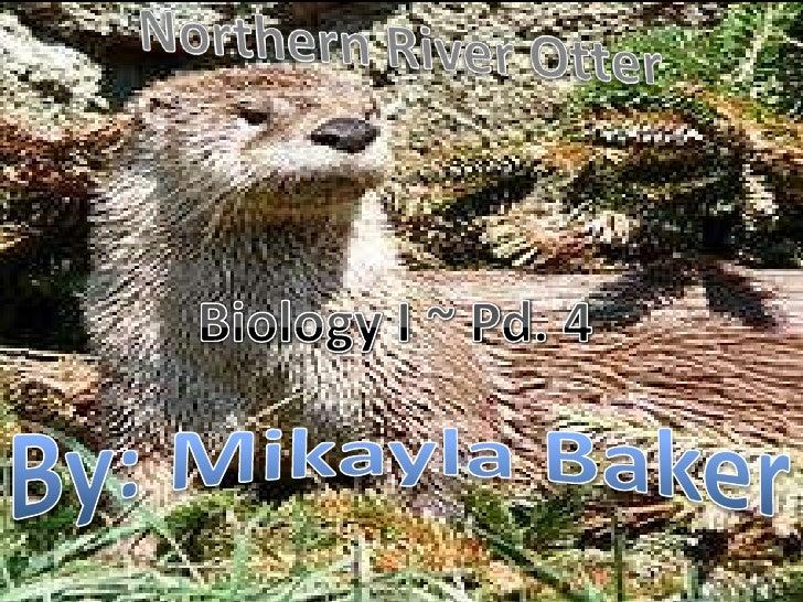 Northern River Otter<br />Biology I ~ Pd. 4<br />By: Mikayla Baker<br />