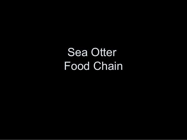 Sea Otter Food Chain