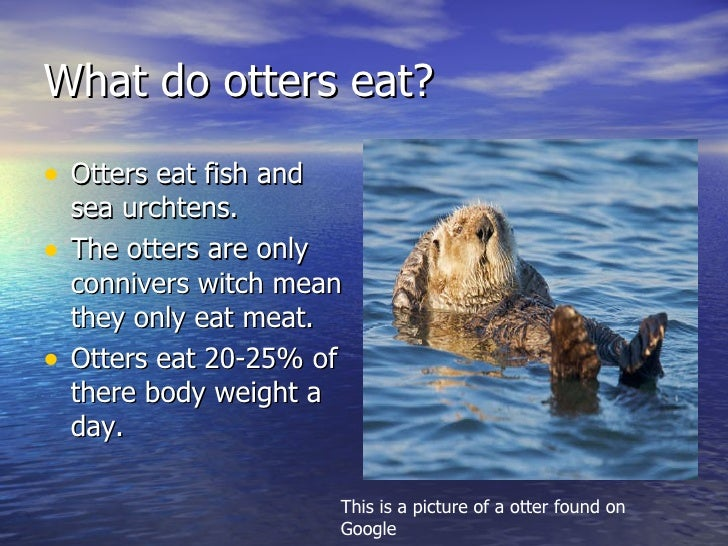Sea otters for What do fish eat in the ocean