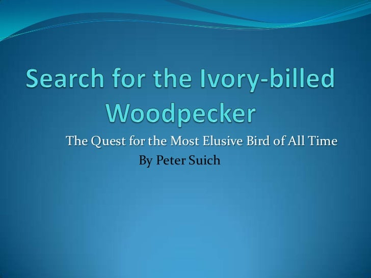 The Quest for the Most Elusive Bird of All Time            By Peter Suich