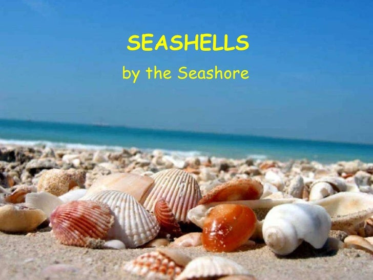 PowerPoint Show by Emerito SEASHELLS by the Seashore Music: Under the Sea SEASHELLS by the Seashore