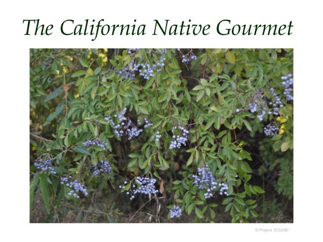The California Native Gourmet  © Project SOUND