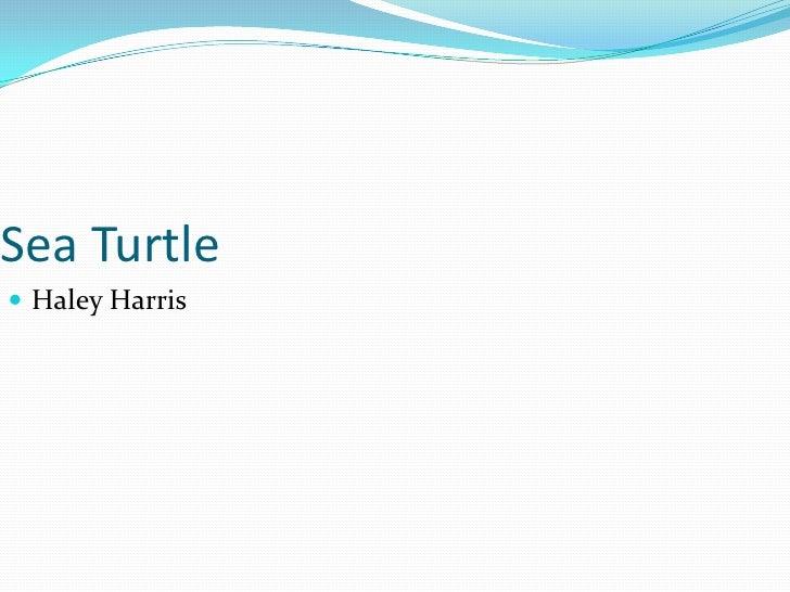 Sea Turtle<br />Haley Harris<br />
