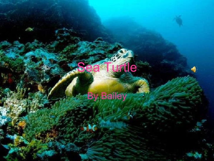 Sea Turtle By Bailey