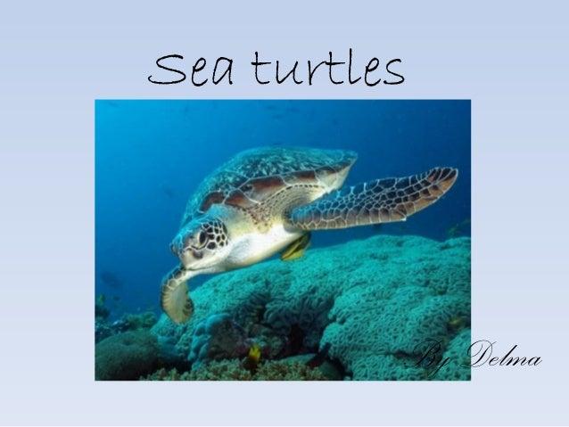 Sea turtles By Delma