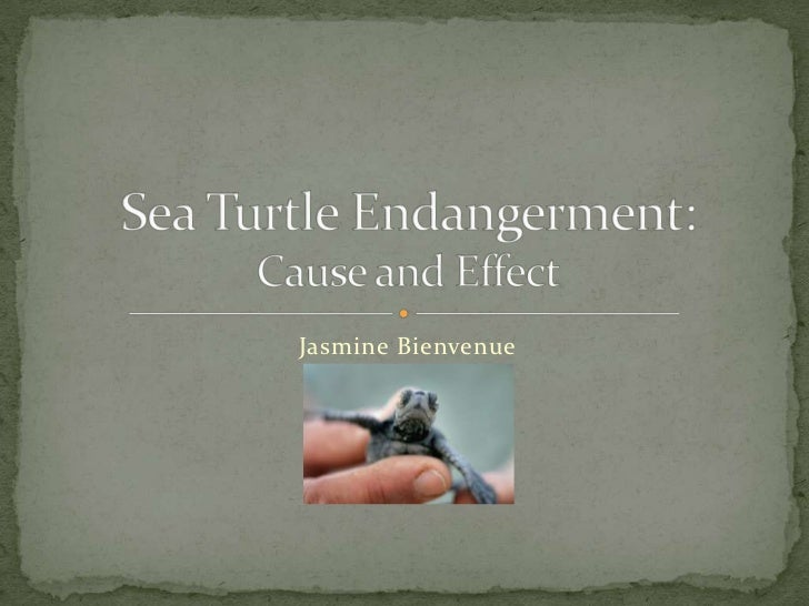 Jasmine Bienvenue<br />Sea Turtle Endangerment:Cause and Effect<br />