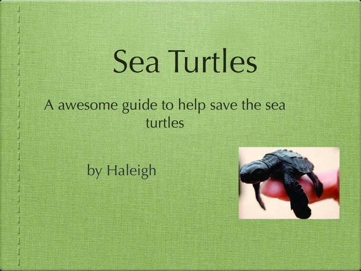Sea Turtles A awesome guide to help save the sea              turtles         by Haleigh