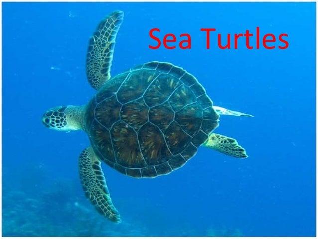 Sea Turtle Diagram Trusted Wiring Diagrams