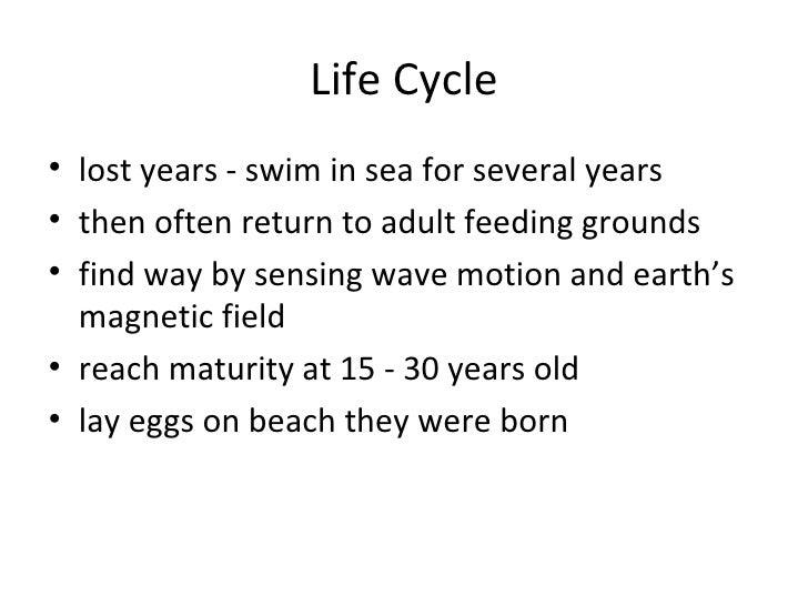 Threats• destruction of nesting habitat  – development  – beach erosion  – compacting beach sediments – by cars