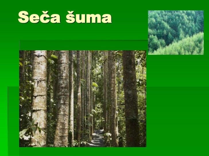 Seča šuma<br />