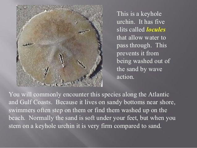 Sea Urchin & Sea Cucumber Notes