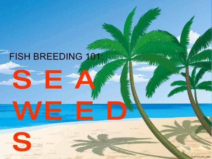 FISH BREEDING 101: SEA WEEDS