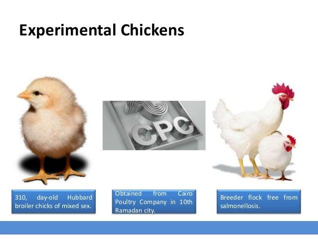Avian Salmonella Inactivated Vaccine Against Probiotics Slide 3