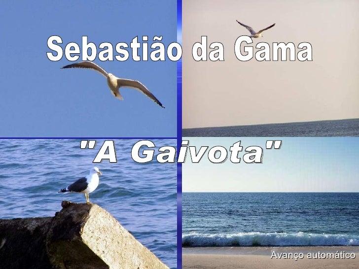 """Sebastião da Gama """"A Gaivota"""" Avanço automático"""