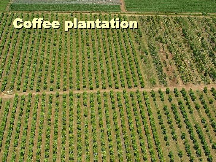 Sec 2 Na Plantation Agriculture
