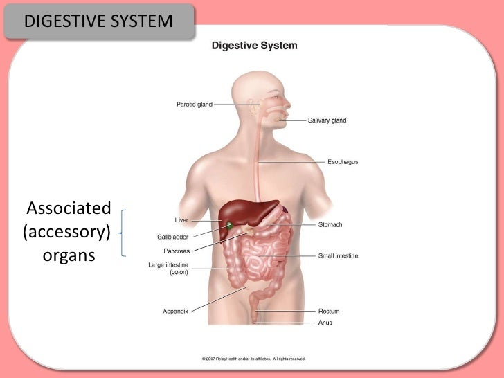 Digestion Absorption And Enzymes