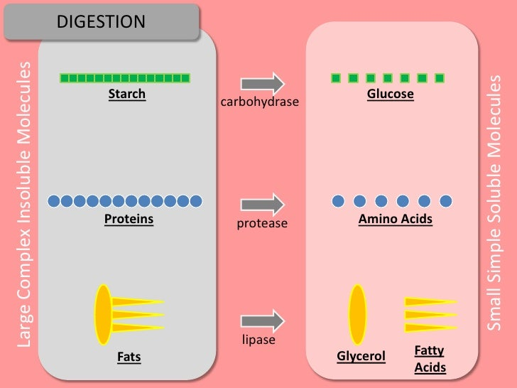 glucose is to starch as a steroid is to lipid
