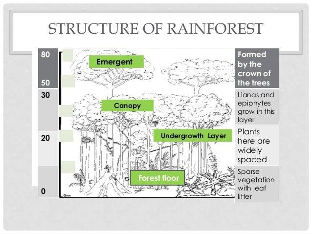 2014jsssec 1 g_ _unit_3 1_ 3 2 Strawberry Diagram structure of rainforest