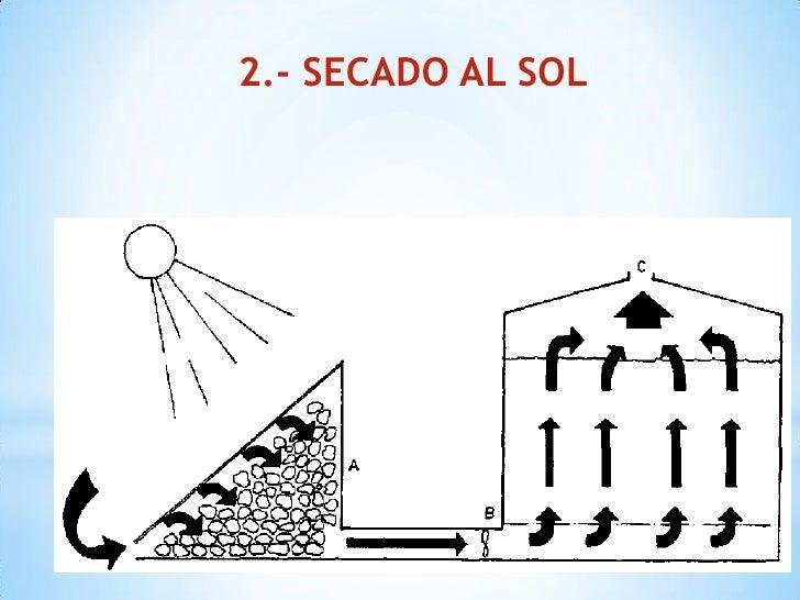 como secar semillas