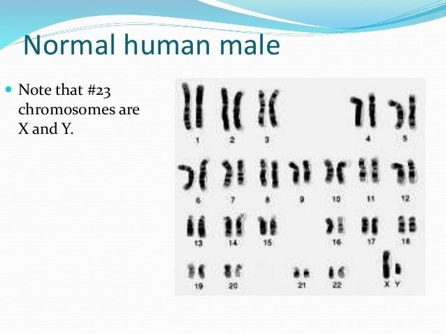 How are DNA samples obtained for karyotypes?