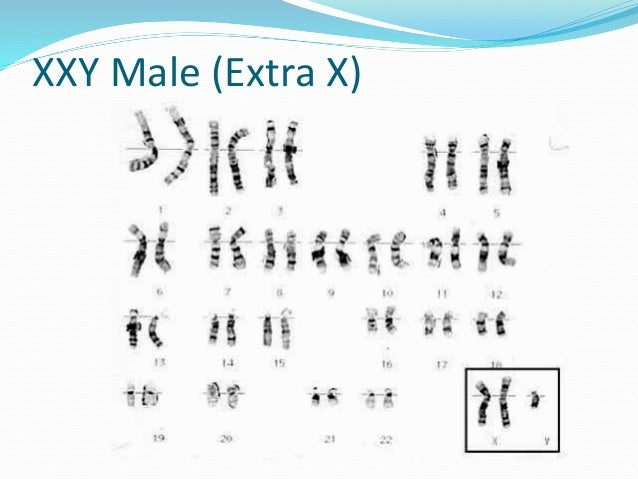  The various important factors for cell line characterization are:  It leads to authentication or confirmation that the ...