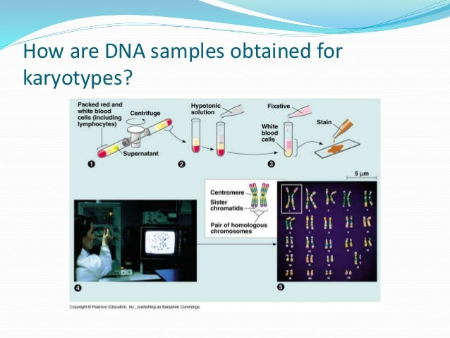 Parameters of Characterization Biochemical  Enzymes: Three parameters are available in enzymatic characterization:  The ...