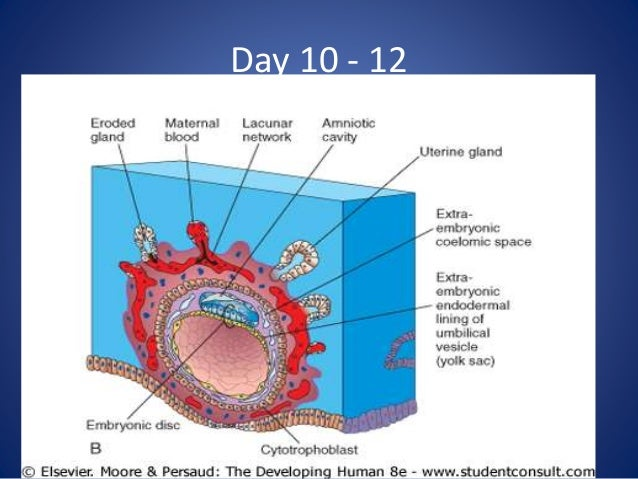 Thickening of the placenta in pregnancy