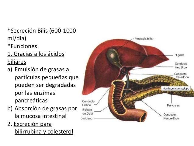 Secreción de bilis por el hígado y funciones