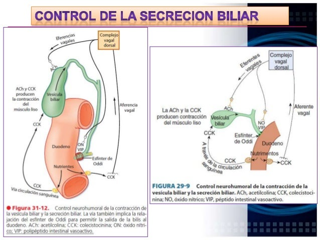 HIGADO ACIDO La estimulación vagal produce una contracción débil de la vesícula Biliar Los ácidos biliares sanguíneos esti...