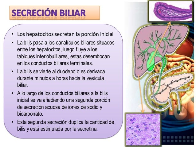 Funciones de la secreción biliar: • La función hepática más importante para el tracto digestivo es la secreción de la bili...