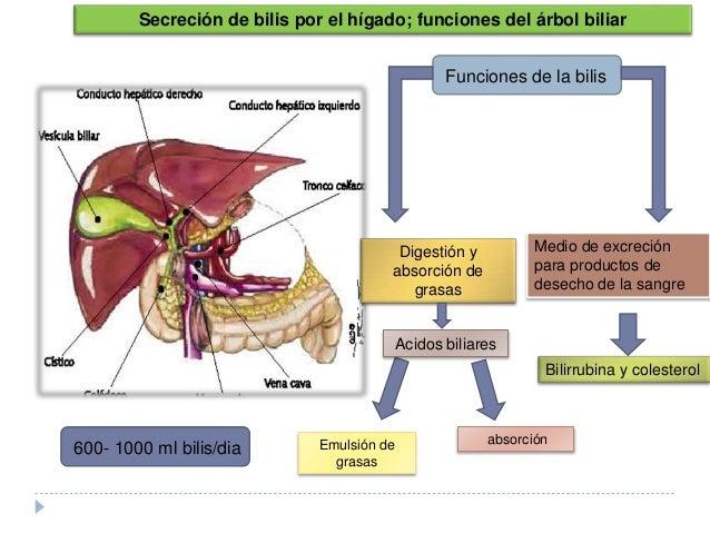 colesterol participa da sintese de hormonios esteroides